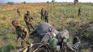 Keine Angst, es geht ihr gut: Eine betäubte Elefantendame bekommt einen GPS-Sender verpasst, um sie jederzeit orten zu können.