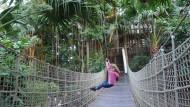 Ich Jane? Du Tarzan? Am Seil durch den Urwald.