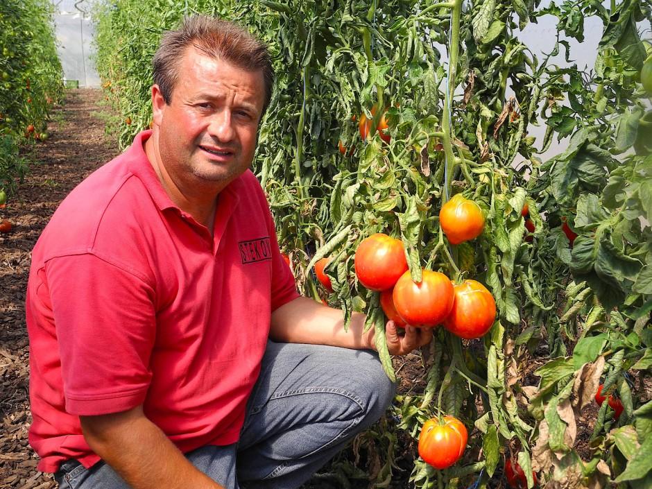 Niemand versteht von Tomaten so viel wie Erich Stekovics, der Tausende verschiedener Sorten gezüchtet hat.