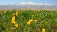 Die Steppenschönheiten der bunten Berge