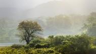 Nur noch achtzehn Prozent von Costa Rica sind mit Regenwald bedeckt. In naher Zukunft aber soll ein Jaguar einmal von Nord nach Süd durch das Land wandern können.