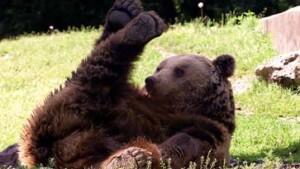 Der Glaube versetzt Bären