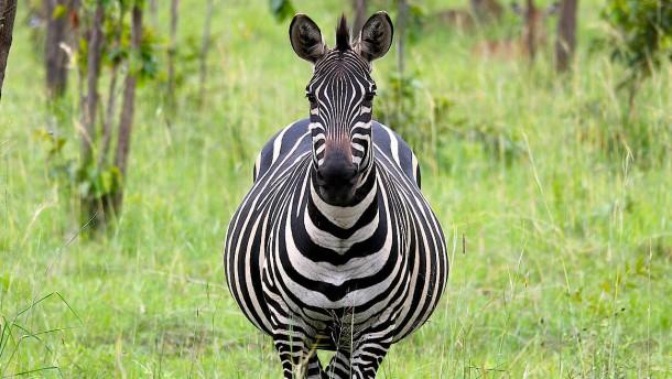 Eine Alternative zur Serengeti?