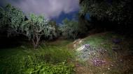 In der Krise besinnen sich die Griechen auf ihr Olivenöl
