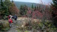 Schwarzwald, wie bist du schön: Vom Aussichtspunkt Bildstein geht es immer bergab zum Schluchsee.