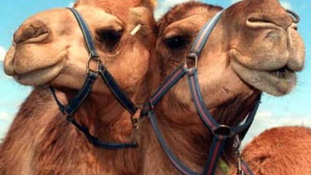 Wo die Kamele wohnen