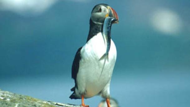 Ein Paradies für Vögel und deren Liebhaber