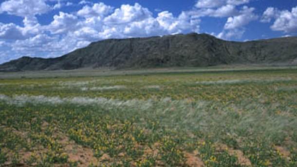 Die Wüste als wogendes Blütenmeer