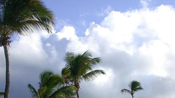 Tagträume unter Palmen