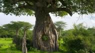 Mitten in Afrika Jenseits von Afrika spielen