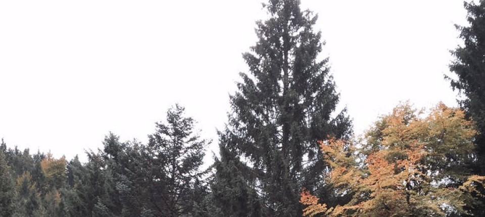 Weihnachtsbaum Frankfurt.Riese Aus Dem Schwarzwald Weihnachtsbaum Für Frankfurt