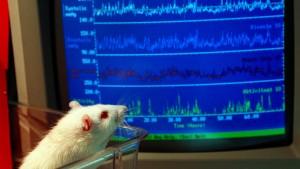 Von Mäusen mehr über den Menschen lernen