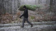 Wo man im Wald einen Weihnachtsbaum findet