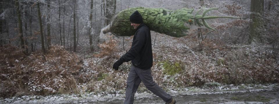 rhein main wo man im wald einen weihnachtsbaum findet. Black Bedroom Furniture Sets. Home Design Ideas