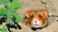 Hamster stoppen Bagger