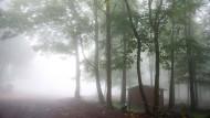 Verwunschen: Auf dem Gipfel des Hoherodeskopfes im Nebel