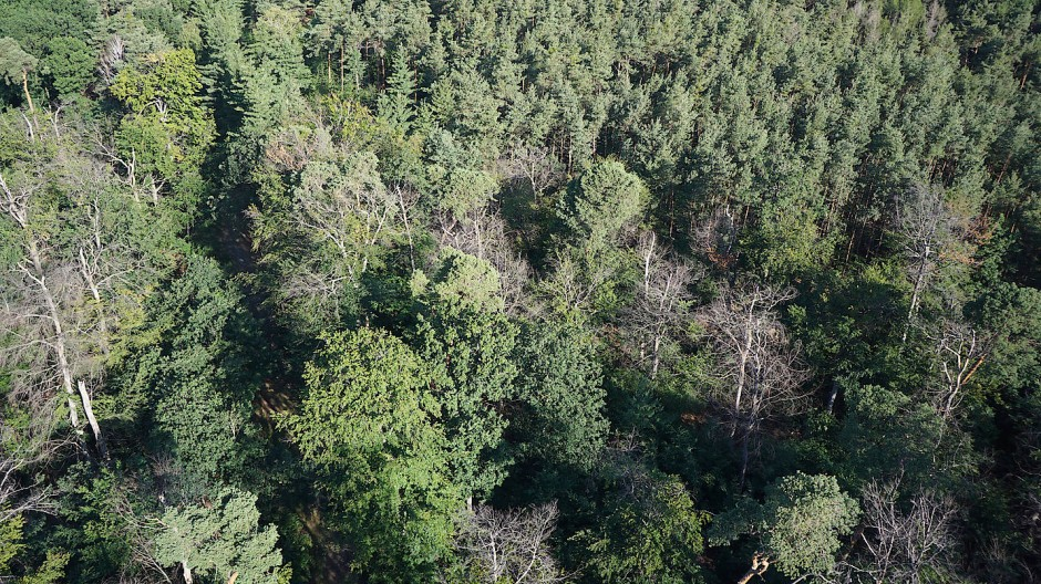 Krank und abgestorben: Der Zustand des Stadtwalds ist laut des aktuellen Berichts dramatisch.