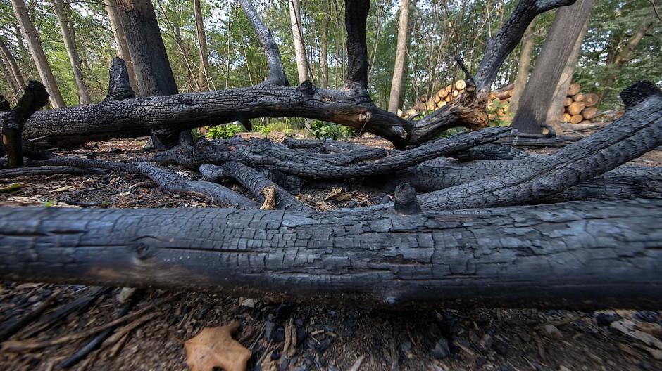 Holzkohle: Die Waldbrandgefahr bleibt in Rhein-Main hoch