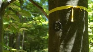 Wartelisten für Grabstätten unter Bäumen