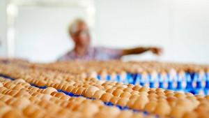 Hinweise auf belastete Eier auch in Hessen