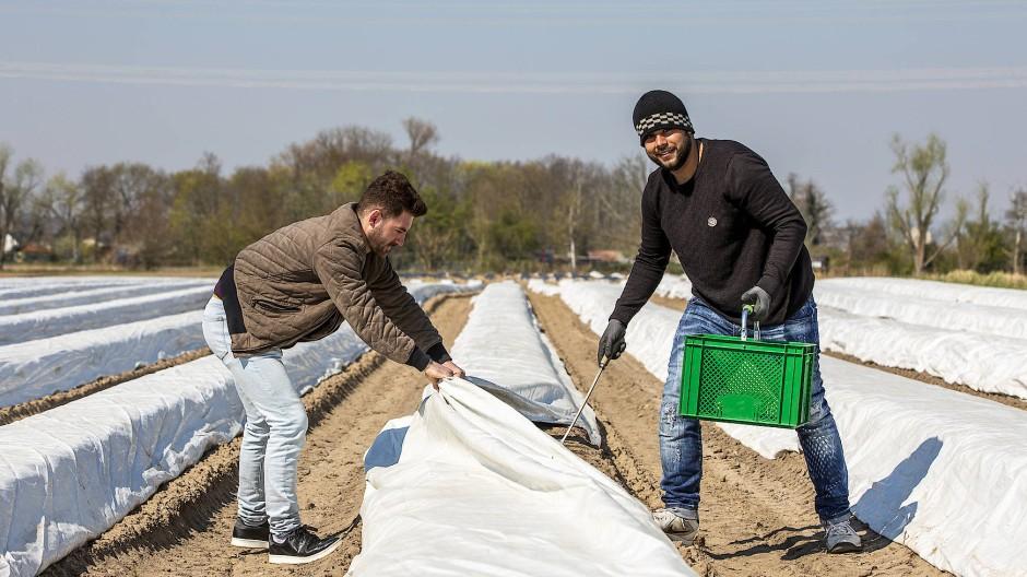 """Verkauft sonst Jeans: Emre Benk (rechts) hilft während der Corona-Krise am Hof """"Junges Gemüse"""""""