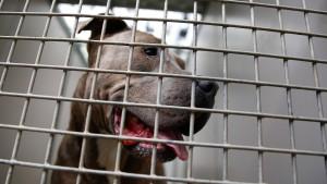 Bissige Hunde und widerständige Bürger