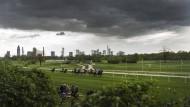 Es geht rund: Wo noch Pferde rennen, will der DFB ein Leistungszentrum bauen