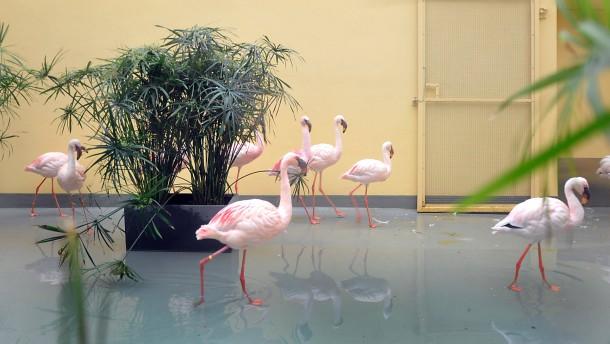 Neue Häuser für Flamingos und Papageien