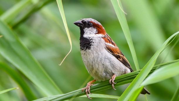 Weniger Vögel als gewohnt in Hessens Gärten
