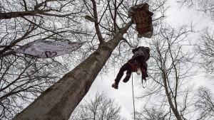 Baumbesetzer in Trebur solidarisch mit Hambacher Aktivisten