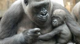 Frankfurter Zoo erfreut über Patenschaften