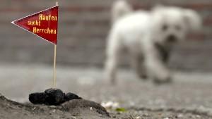 Der unbeteiligte Hund