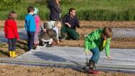 Zusammenarbeit: Frankfurter Familien bearbeiten ihre neuen Gärten auf den Äckern in Nieder-Erlenbach