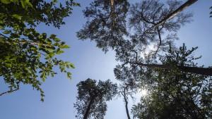 """""""Wasserpfennig"""" für den Stadtwald in Not"""