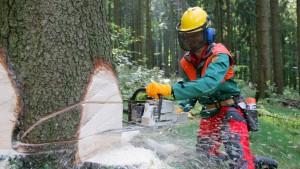 Im Wald wächst mehr Holz, als die Förster ernten