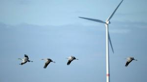 Keine neuen Windräder im Hohen Westerwald