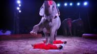 Elefanten aus der Manege: Dafür macht sie Hessens Umweltministerin Priska Hinz stark. (Archivbild)