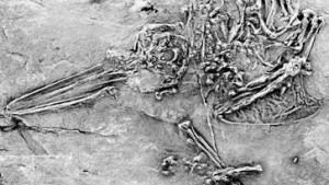 Deutsche Forscher finden älteste Kolibri- und Singvogelfossilien