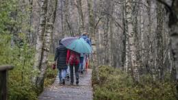Mehr Regen hilft Hessens Wäldern nur bedingt