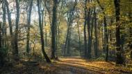Mädchen bei mysteriösem Autounfall im Wald getötet