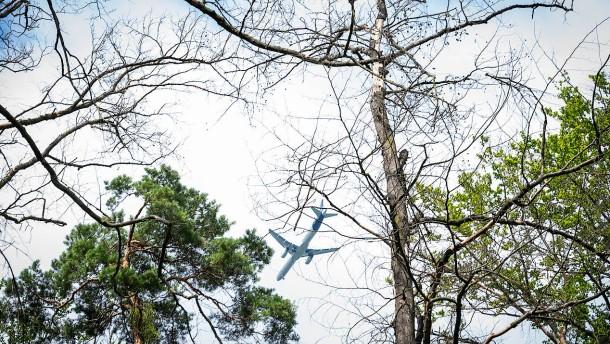 Nur drei Prozent der Bäume gesund