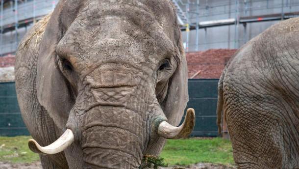 Opel-Zoo kämpft mit Besucher-Rückgang