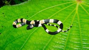 Senckenberg-Forscher entdecken neue Schlangenart