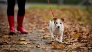 Klar geregelt: Seit 2001 müssen Hunde in Frankfurter Parks jenseits der ausgewiesenen Flächen an der Leine geführt werden.