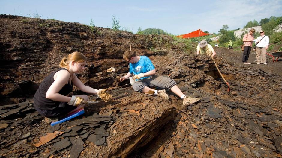 Suche: Ein Grabungsteam spaltet Schieferplatten in der Grube Messel.