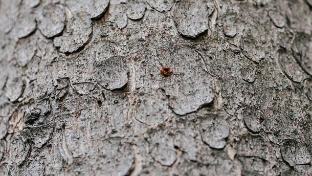 Schäden in Hessens Wäldern nehmen rasant zu