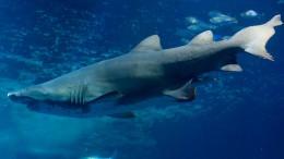 Widerspruch der Hai-Aquarium-Gegner zulässig