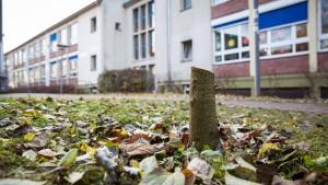 Unbekannte sägen Anne-Frank-Kastanienbaum ab