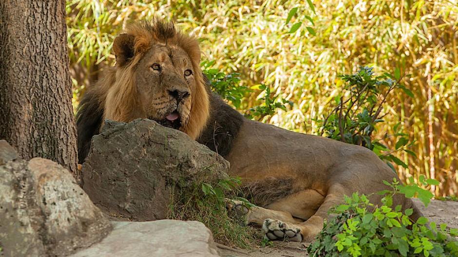Neuer Anführer gesucht: Der Frankfurter Zoo braucht nach dem überraschenden Abschied von Miguel Casares einen neuen Direktor.
