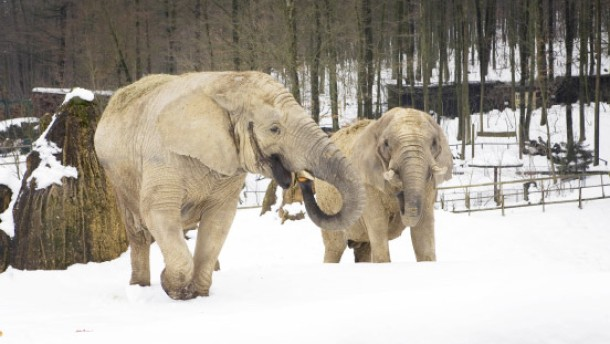 Neue Elefantenanlage für den Opel-Zoo